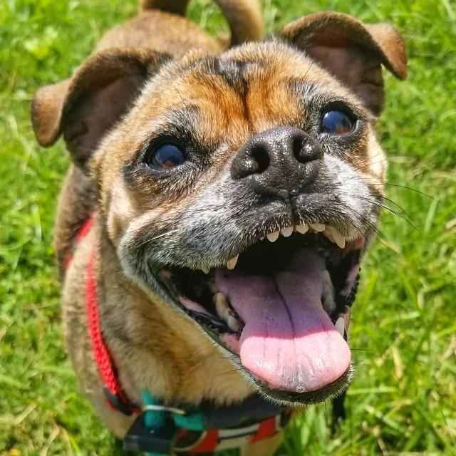 Adopt Asia On Pets Humane Society Asia