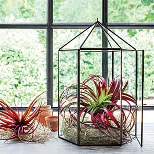 Create a miniature winter garden with ethereal air plants—no soil required! | SouthernLiving.com