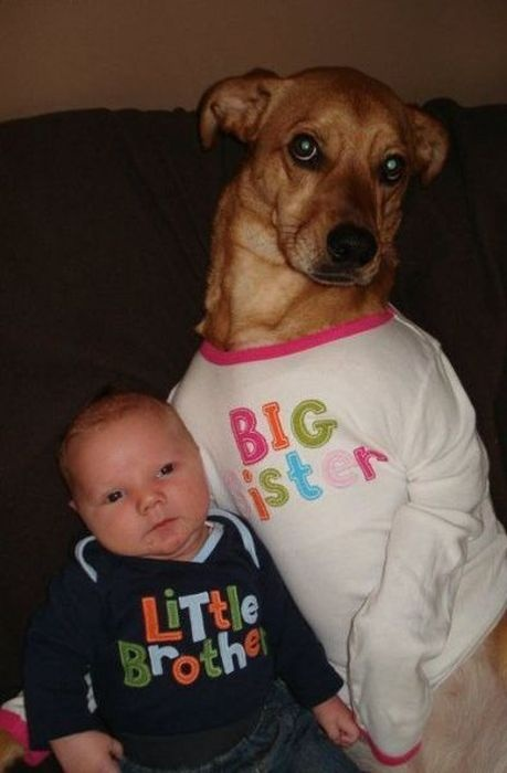 This cracks me up! The look on the dogs face.
