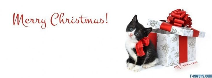 kitten christmas present facebook cover