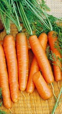 Réussir la culture des carottes