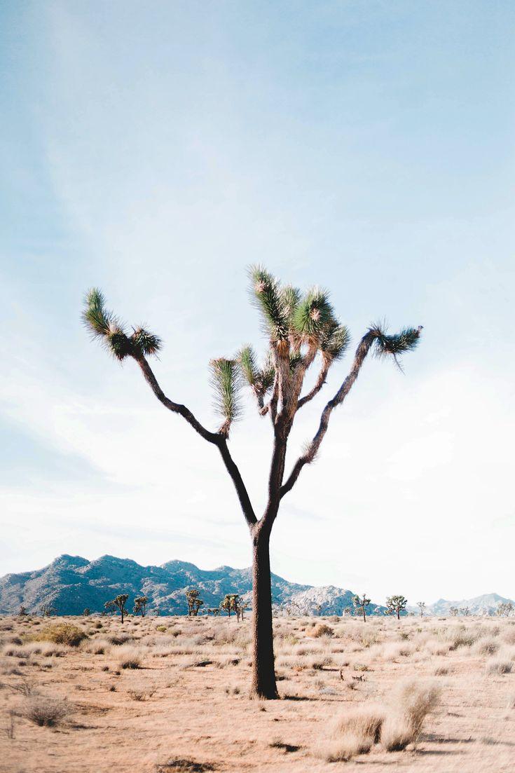 Photo Diary: Palm Springs, CA.