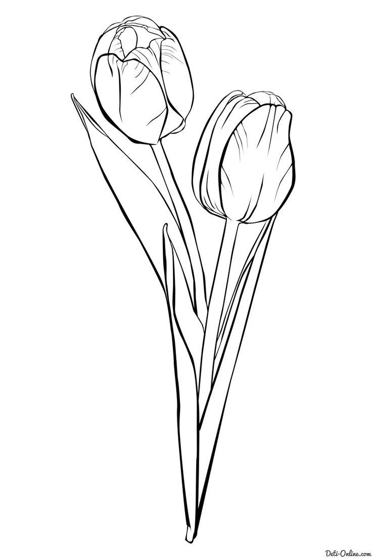 Раскраска Тюльпаны распечатать или скачать   Раскраски ...