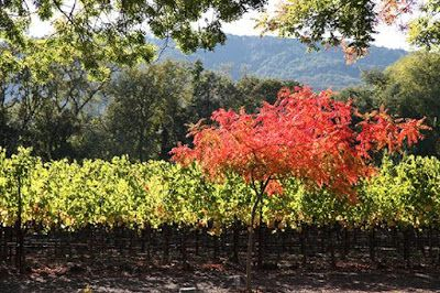 Napa Valley vineyards are amazing places to visit as amidst the natural splendor, the opportunity to taste exquisite quality wines is among a few of its mind-blowing experiences.