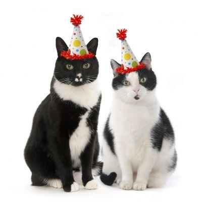 Verjaardagskaart Twee poezen met feestmuts.