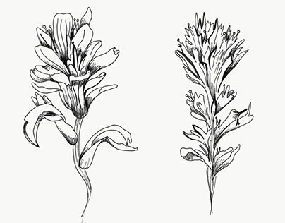 """Check out new work on my @Behance portfolio: """"Indian Paintbrush Tattoo"""" http://be.net/gallery/60490809/Indian-Paintbrush-Tattoo"""