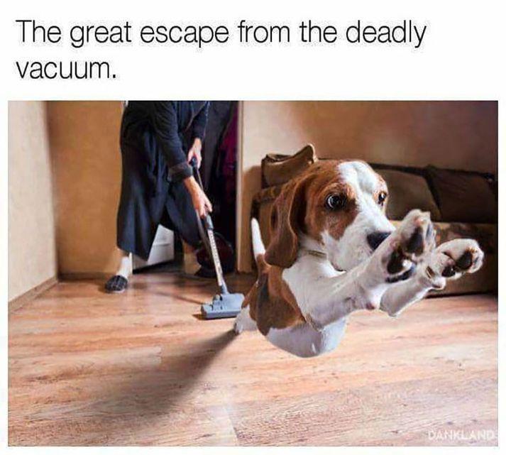 20 Animal Memes