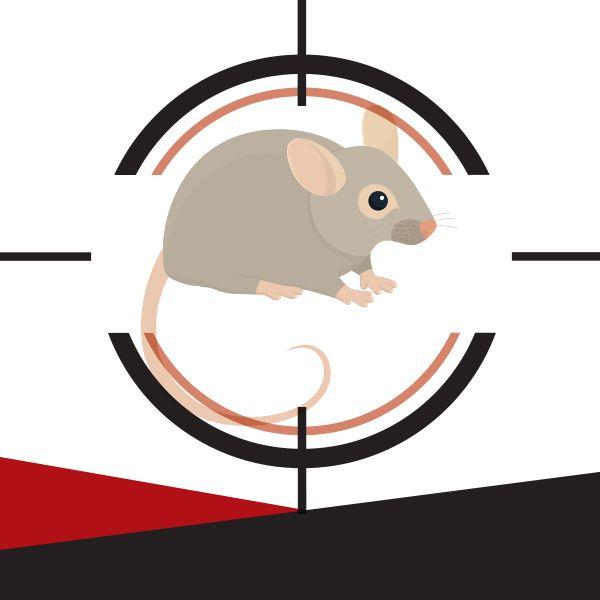 Você sabe como as doenças dos ratos são transmitidas? Entrar em contato com as fezes e a urina e ingerir alimentos contaminados são algumas formas de se contagiar. Leia a matéria na íntegra e saiba quais são as doenças e como evitar: http://combatzika.com.br/voce-sabe-como-as-doencas-dos-ratos-sao-transmitidas/