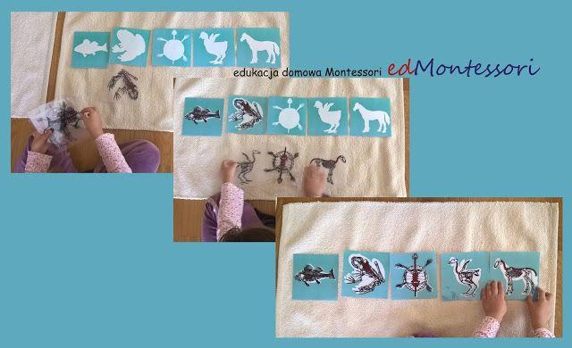 edukacjadomowaMontessori edMontessori: Królestwo zwierząt