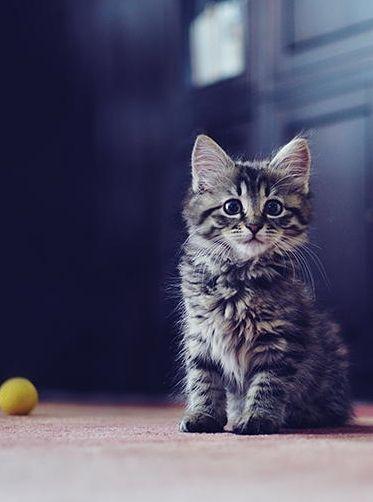 Kitten and yellow ball