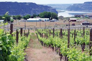 "Sean Sullivan - Washington Wine Report: Washington's 13th AVA: ""Ancient Lakes"""