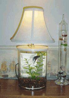 Betta Fish Tank, Fish Tanks, Table Lamp, Desks, Aquariums, Bureaus, Aquarium,  Work Benches, Table