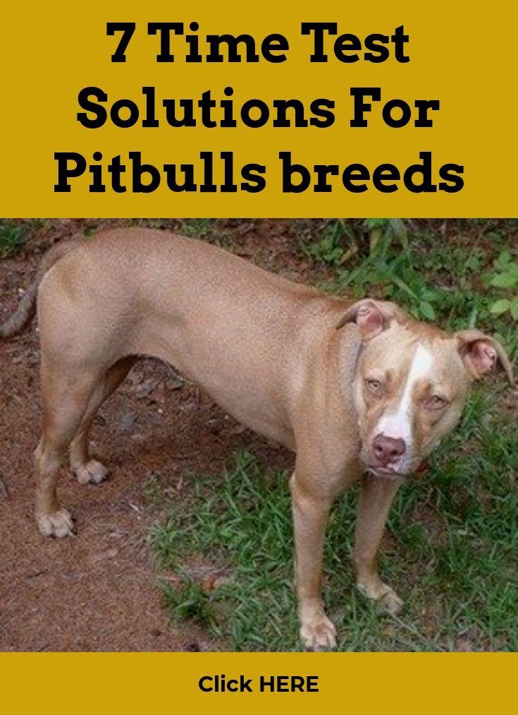 Pitbulls Breeds Pitbulls Cost Click Visit Link Above For