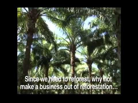 A Darker Shade of Green: REDD Alert and the Future of Forests. This video includes interviews with indigenous and local communities who are critical of the scheme known as REDD+ (Reduced Emissions from Deforestation and Degradation) that proposes to pay developing countries to keep their forests standing.
