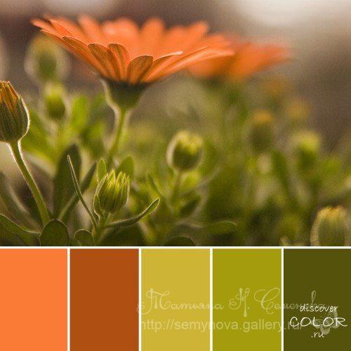 Gallery.ru / Фото #16 - сочетание цвета оттенки зелени - semynova