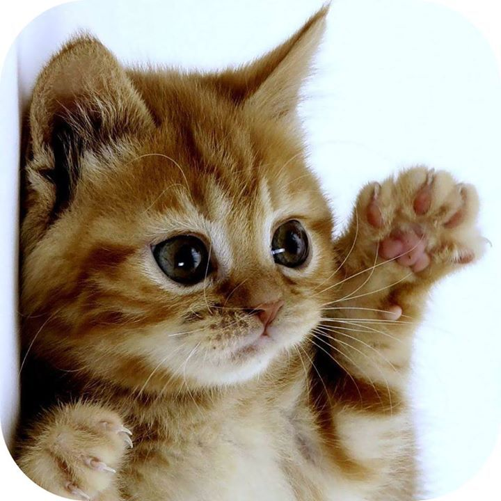 Raise a PAW if you're PRAISING JESUS on this Christmas Eve Day!   -------------------------------------------------------------- Shared with JOY via FamilyChristianBookstore.net