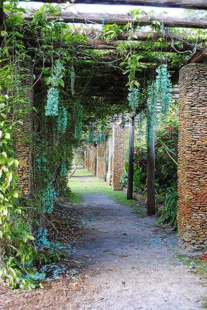 Jade Vine ou Jade videira Também conhecida como: Emerald trepadeira Nome científico: Macrobotrys Strongylodon Família: Fabaceae (ervilha, fe...