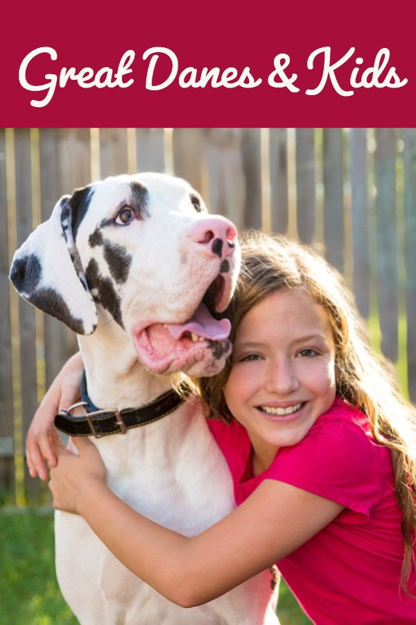Worried About Your Great Dane Getting Along With A Baby Toddler