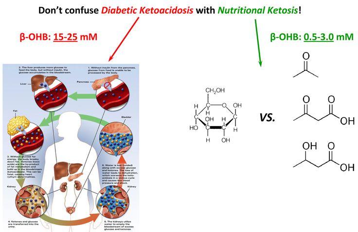 DKA vs. Nutritional Ketosis | Ketones are not harmful with normal blood sugar! | Pinterest ...