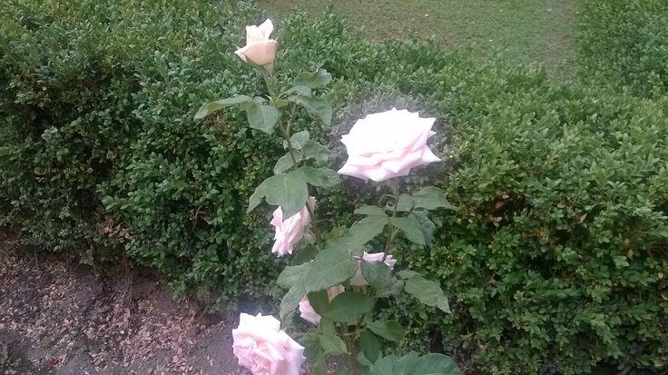 Roses, Basilica di San Paolo, #Rome