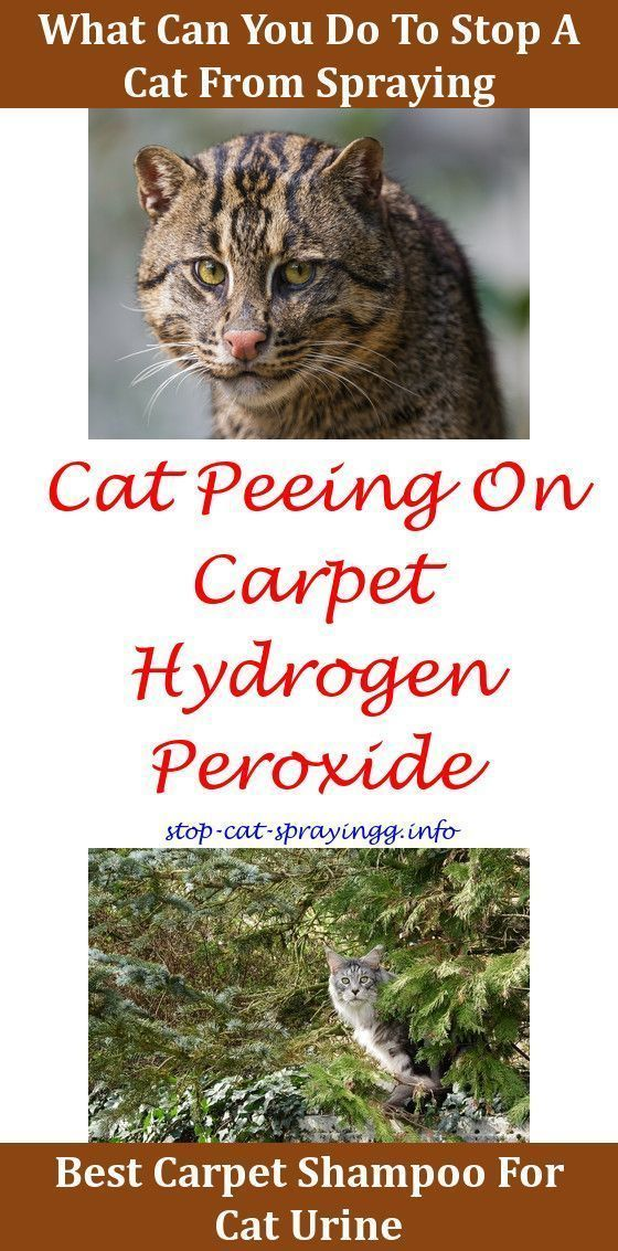 Understanding Your Cat's Behavior Cat behavior, Cat pee
