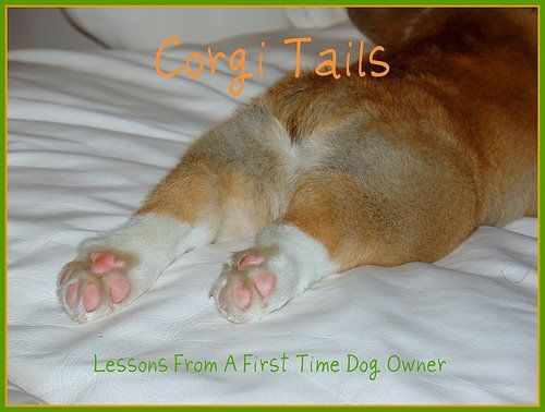 Corgi Tails- the story of a first time dog owner and her corgi. Perfect for prepping myself for my own future corgi!