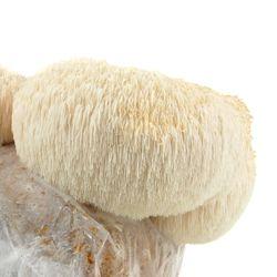 Mojo Pro-Gro Lions Mane Mushroom Grow Kit organic, lions mane, mushroom