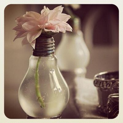 soliflore ampoule