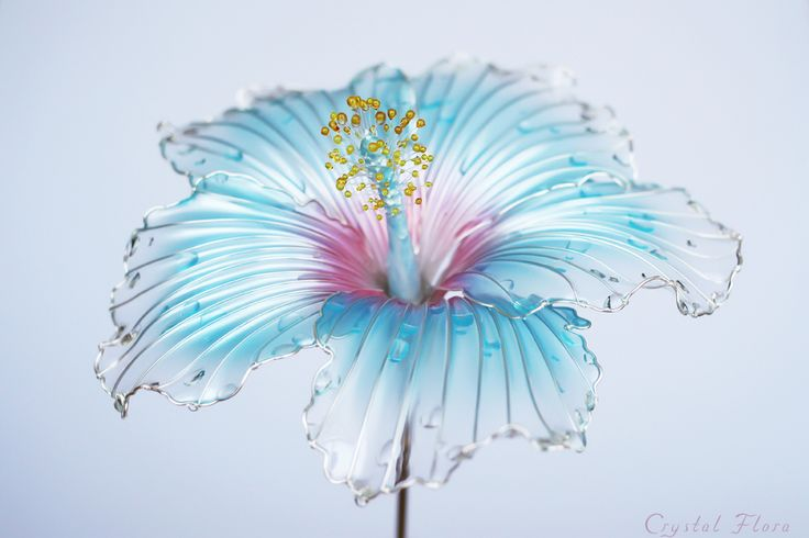 Hibiscus for hair @crystalflora_official (Crystal Flora, hair accessory, kanzashi, of synthetic resin and wire, American flowers, it is not kanzashi by Sakae, luxury jewelry, wedding decorations, wedding flowers, transparent flowers)