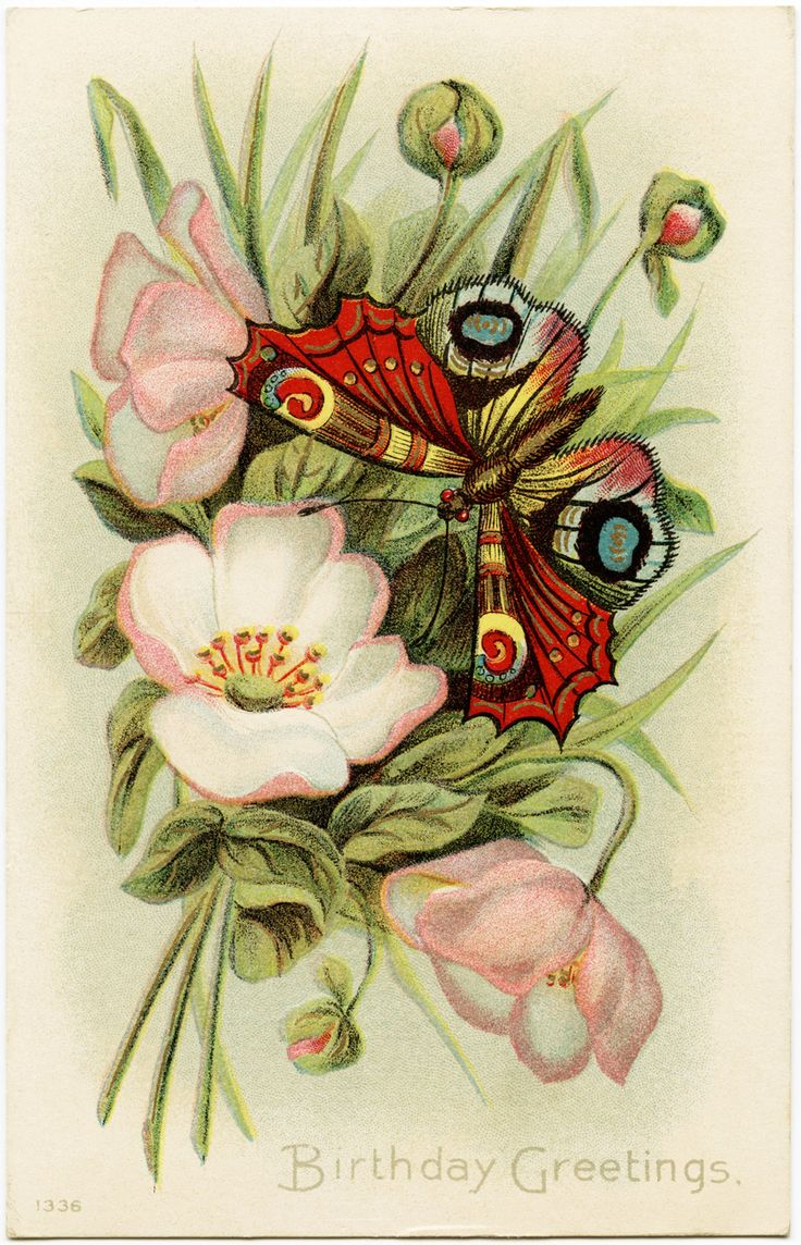 Old Design Shop ~ free digital image: flowers and butterfly vintage birthday greetings postcard
