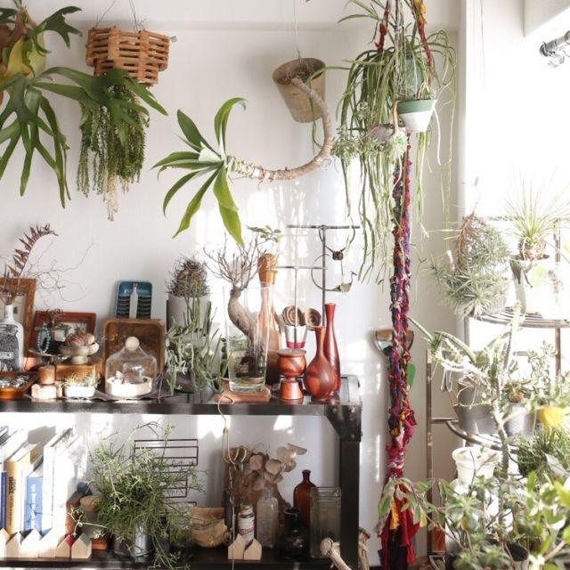 tkさんの、塩系インテリア,男前,DIY,ドライフラワー,多肉植物,アンティーク,雑貨,植物,ナチュラル,照明,観葉植物,壁/天井,のお部屋写真