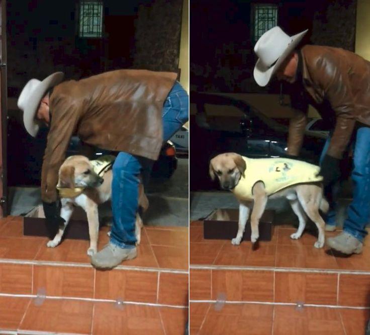 El dueño de una tienda decide hacer abrigos para repartir a los perros callejeros:  #perro #perros #animales #animal #mascota #mascotas #cachorro #cachorros #mexico #tlaxcala #noticia #noticias #schnauzi #viral #vaquero #vaqueros