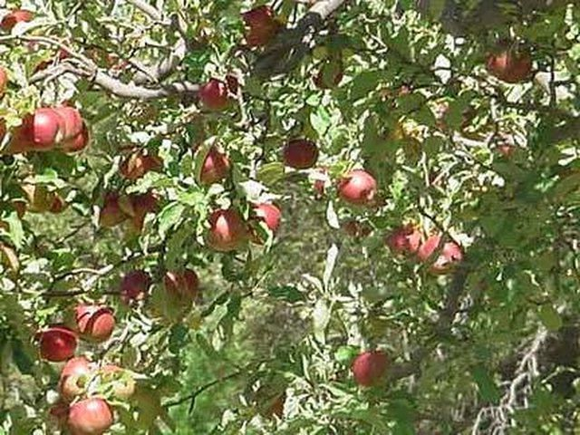 Apple Trees Of Any Variety Are A Wonderful Addition To Your Landscape Whether Dwarf Or Full Size Maintainin Apple Tree Care Apple Tree Apple Tree Care Sprays
