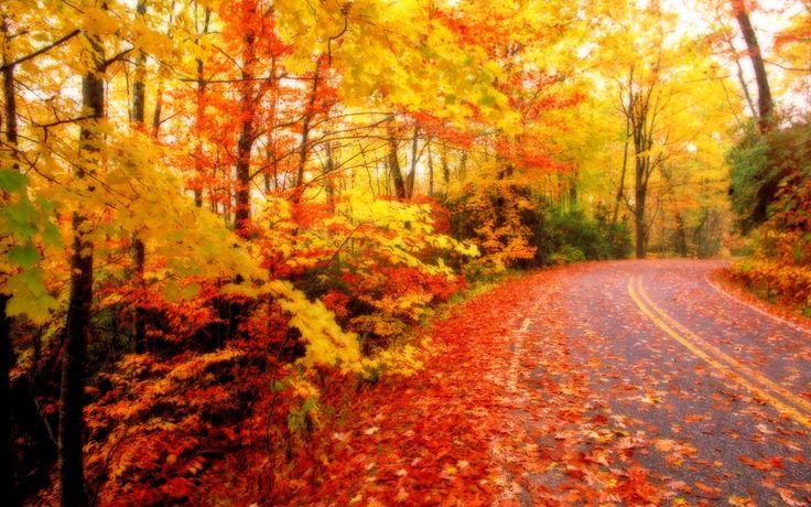 Fall Leaves Wallpaper Wide