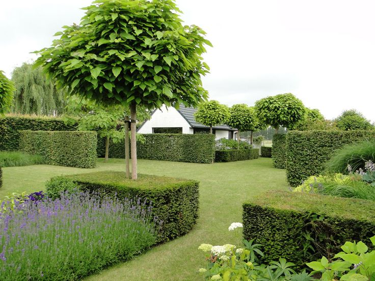 "clipped box hedges block planted lavender, and uniform (Catalpa bignoides 'Nana' ""Indian Bean tree"") trees - lovely! Thomas Leplat"