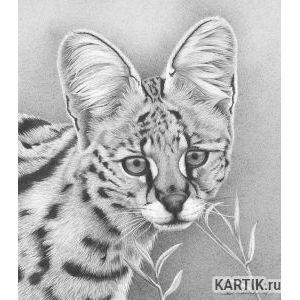 Удивительные графитовые рисунки животных  Fresher   Лучшее из ... 33
