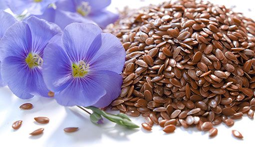 Самые полезные для человека семена