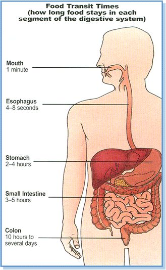 The Digestive System As It Relates To Colonics
