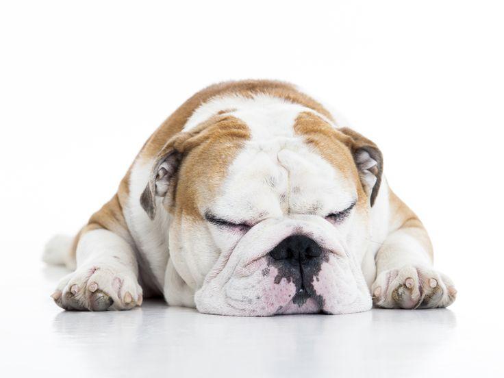 <p>Hej alla hundälskare! Måste bara visa er lite sköna bilder på den Engelska Bulldog-(en) Jonas som bor här i Täby/Stockholm. Han går att följa på Instagram och har snart nästan 10.000 följare! Vi fotograferar gärna hundar och det händer ganska…</p>