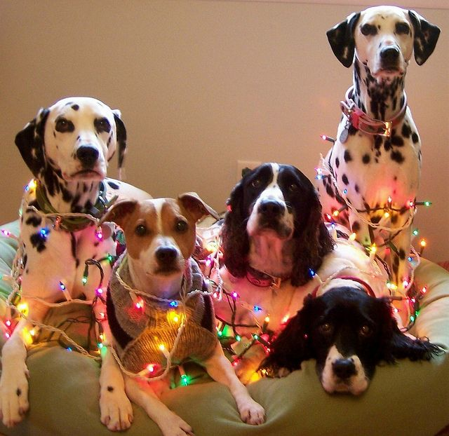 multiple dogs wrapped in christmas lights - Dog Christmas Lights