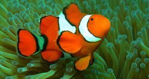 Australia: Wielka Rafa Koralowa