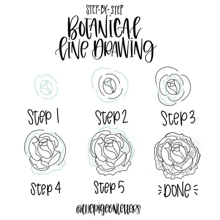Step-by-step Botanical Drawings