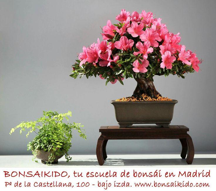 Escuela de bonsais online dating