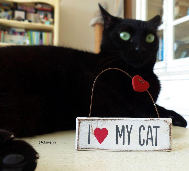 moonlightcat13: Kedimi Seviyorum ♥