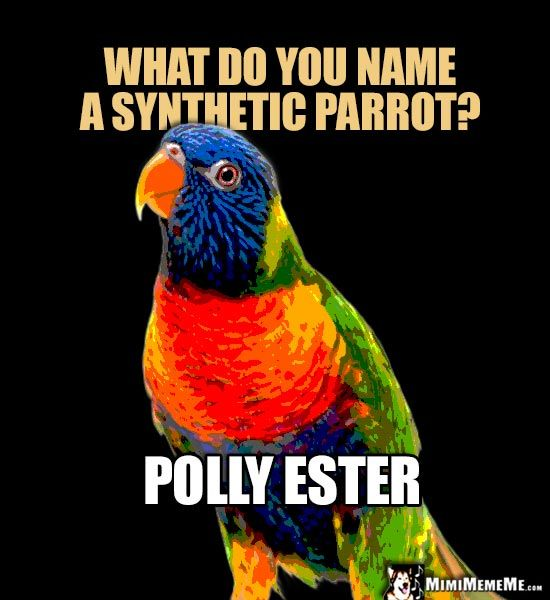 Image result for talking parrot pet store