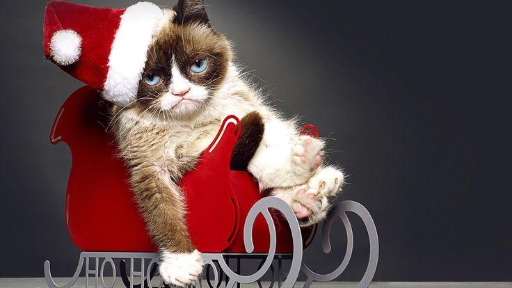 1920x1080 Обои худшее рождество сердитой кошки, 2014, обри плаза