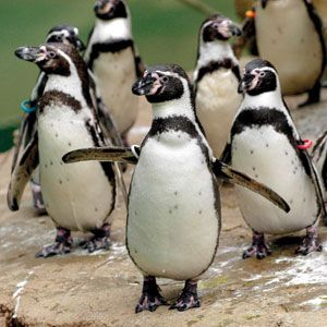 Woodland Park Zoo Discount Admission Tickets   Seattle CityPASS® Attraction