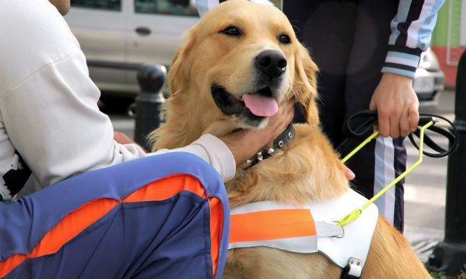 Adiestrar perros para terapia asistida