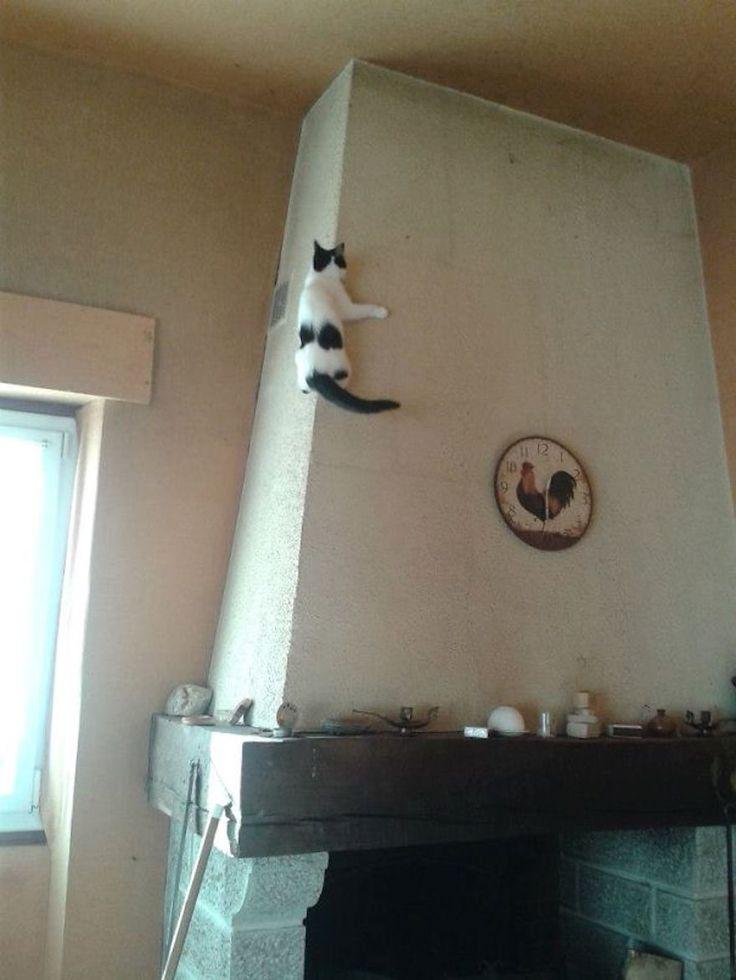 Ces chats sortent de l\u0027ordinaire Surtout le chat 26