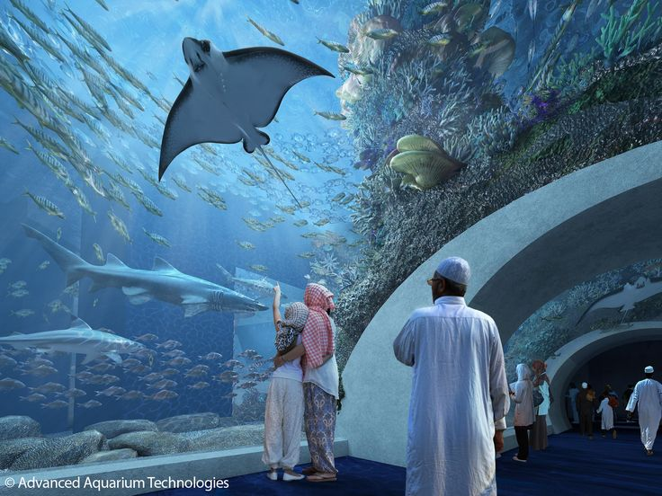 Spectacular tunnels, enormous cylinders, gigantic panels: Advanced Aquarium Technologies has used #originalplexiglas for #aquarium projects around the world for many years. Such as in this project in Oman, opening in 2017. #evonikplexiglas #acrylic #fish #plexiglas #technology #oman #mantaray #underwater #sea